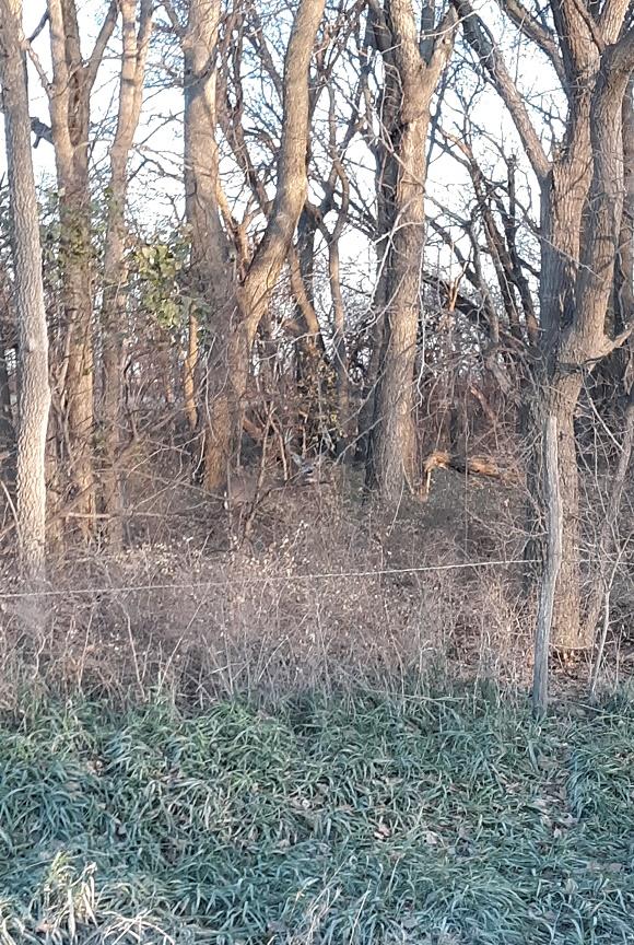 Buck west fence.jpg